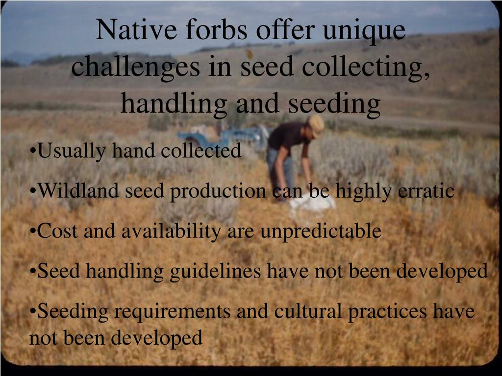 Native forbs offer unique challenges in seed collecting, handling and seeding