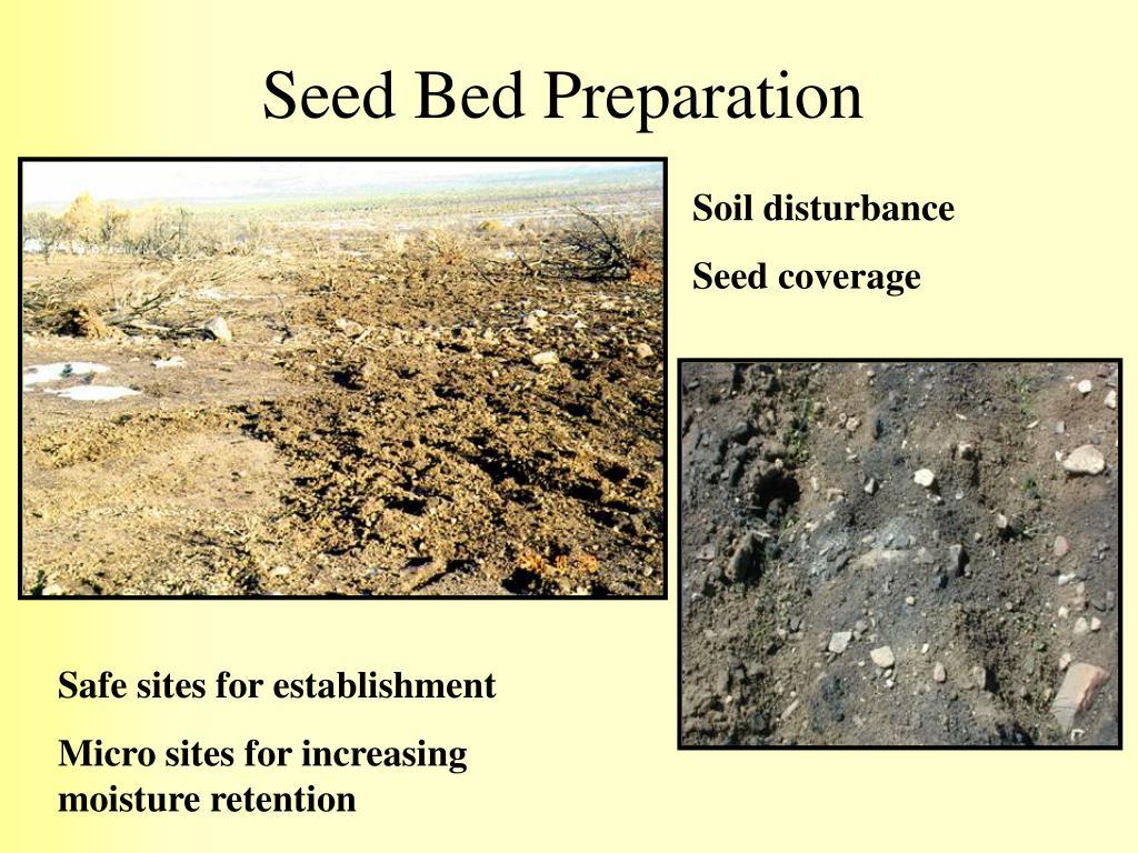 Seed Bed Preparation