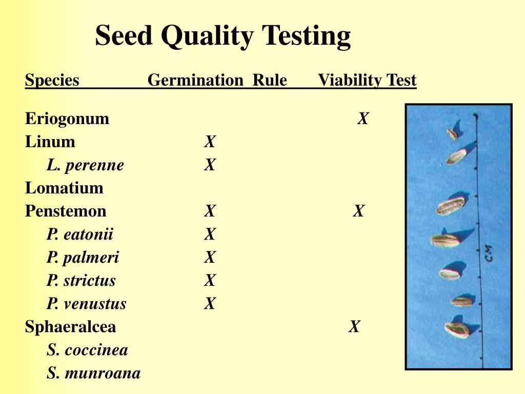 Seed Quality Testing