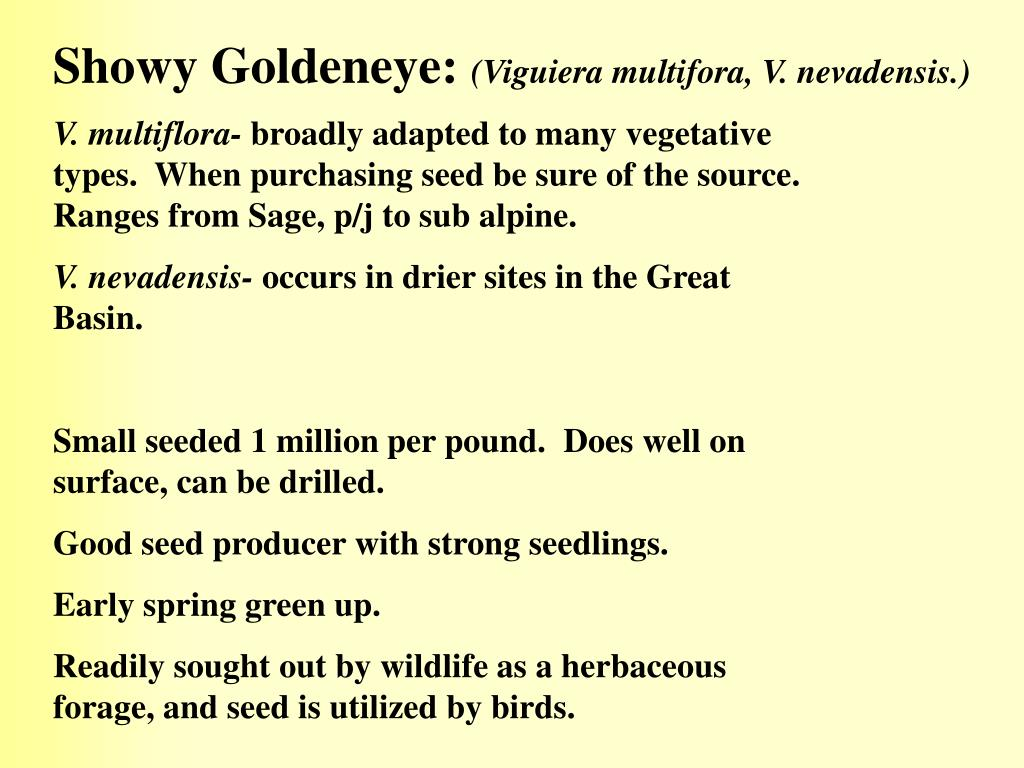 Showy Goldeneye: