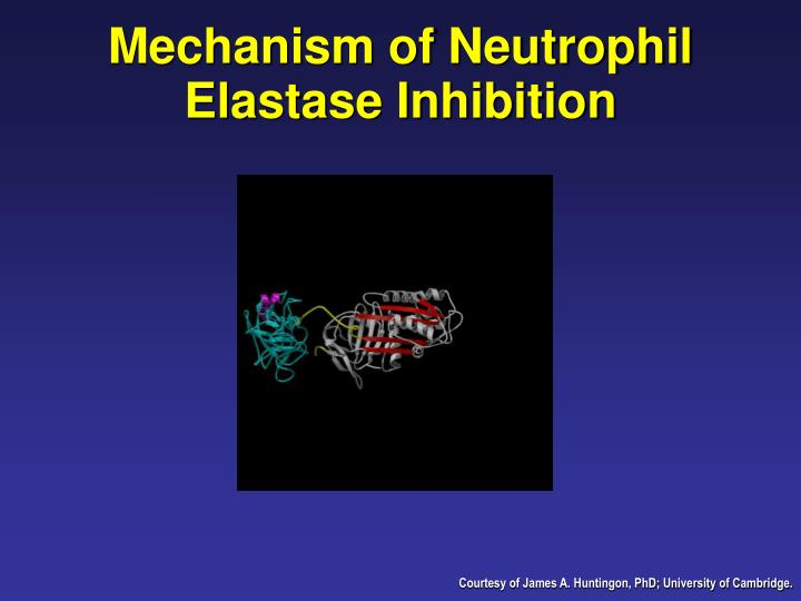 Mechanism of Neutrophil Elastase Inhibition