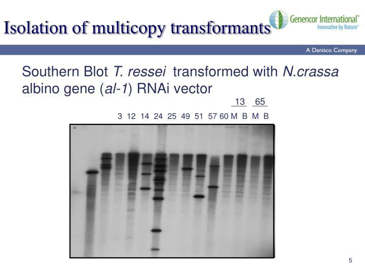 Isolation of multicopy transformants