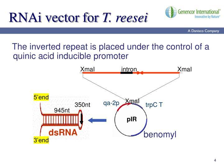 RNAi vector for