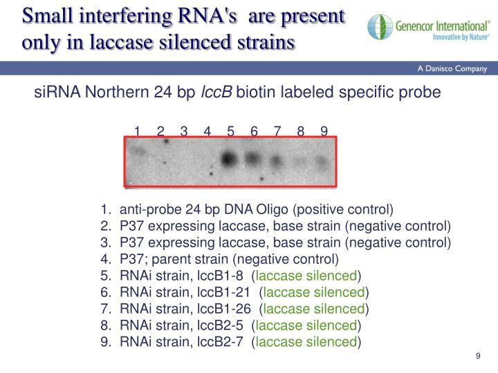 Small interfering RNA's  are present