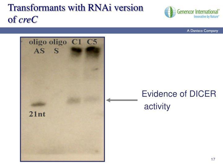 Transformants with RNAi version