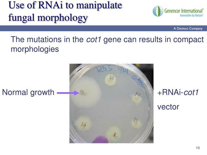 Use of RNAi to manipulate fungal morphology