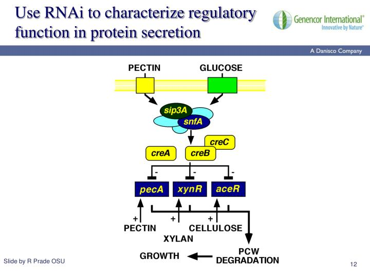 Use RNAi to characterize regulatory function in protein secretion