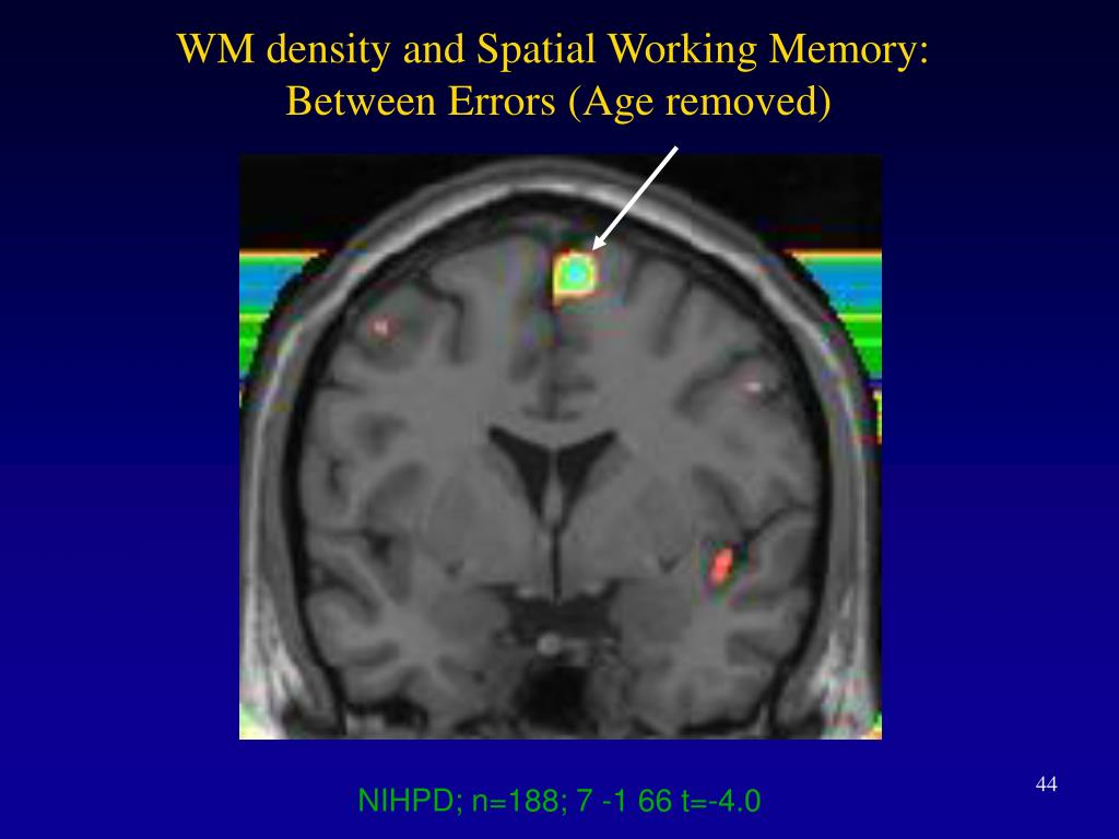 WM density and Spatial Working Memory: