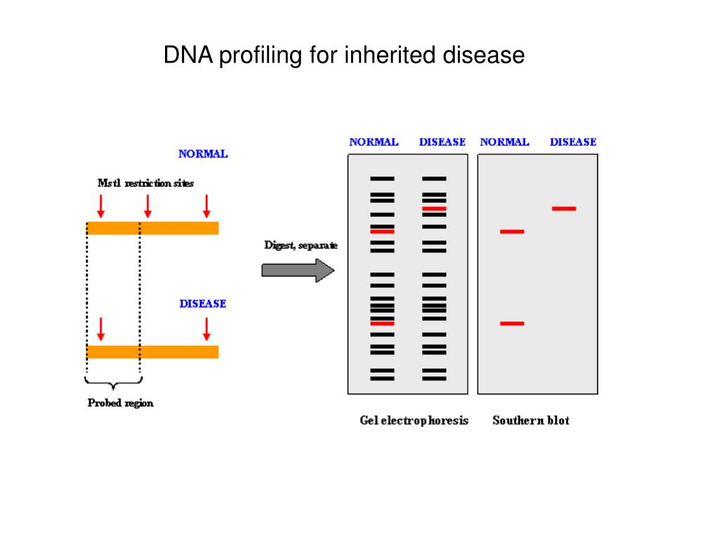 DNA profiling for inherited disease
