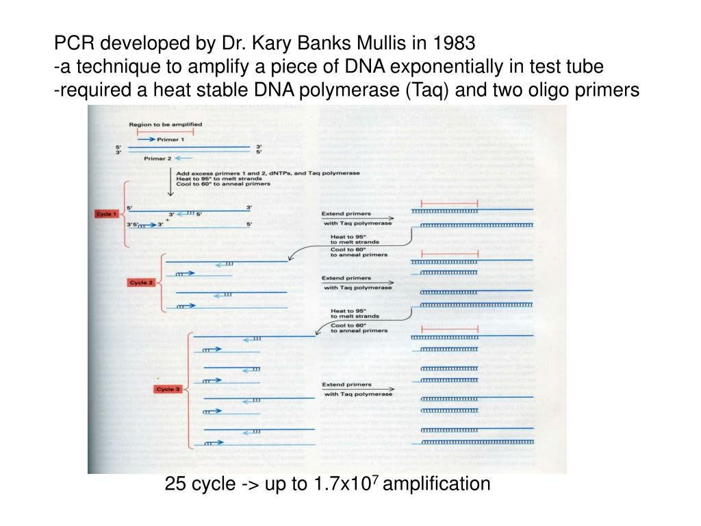 PCR developed by Dr. Kary Banks Mullis in 1983