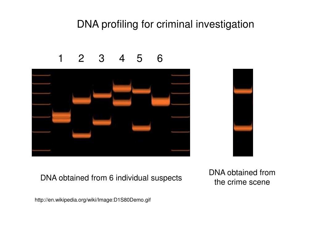DNA profiling for criminal investigation
