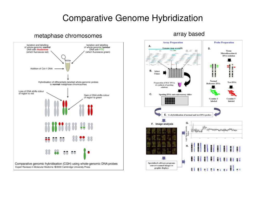 Comparative Genome Hybridization