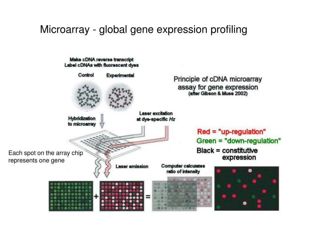 Microarray - global gene expression profiling