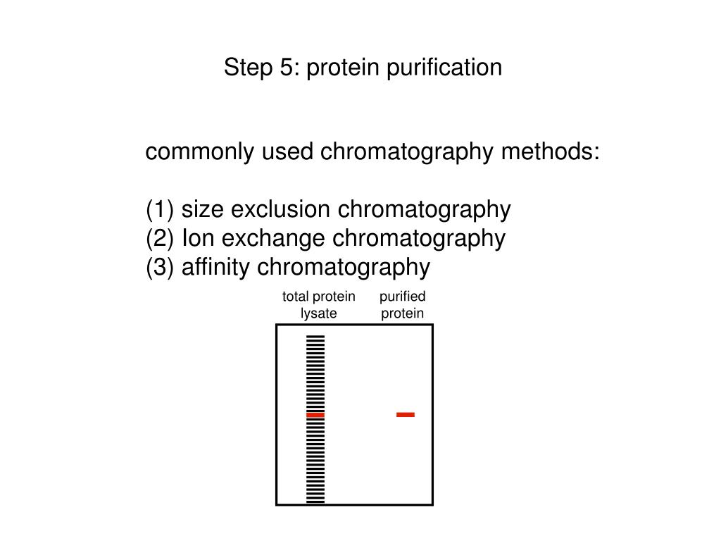 Step 5: protein purification