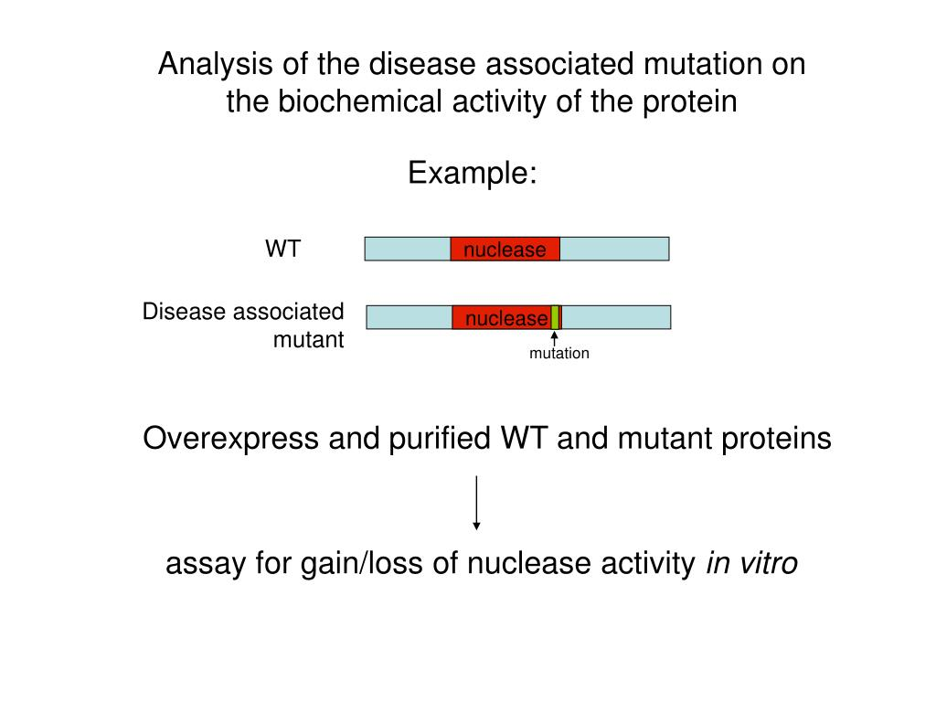 Analysis of the disease associated mutation on