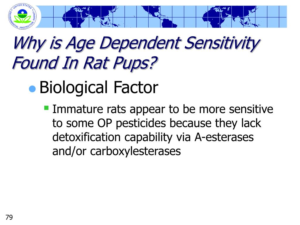 Why is Age Dependent Sensitivity Found In Rat Pups?