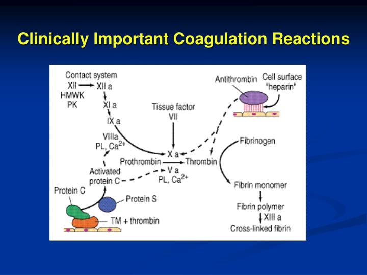 Clinically Important Coagulation Reactions