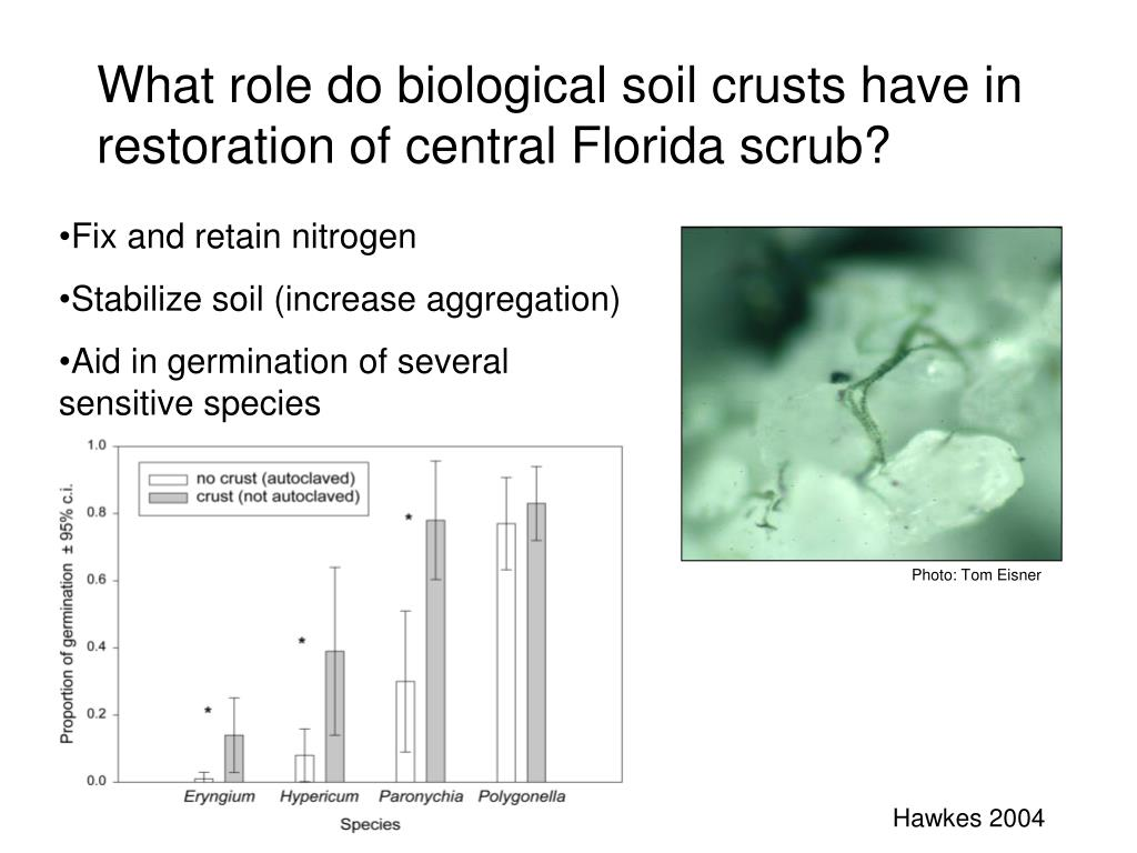 What role do biological soil crusts have in restoration of central Florida scrub?