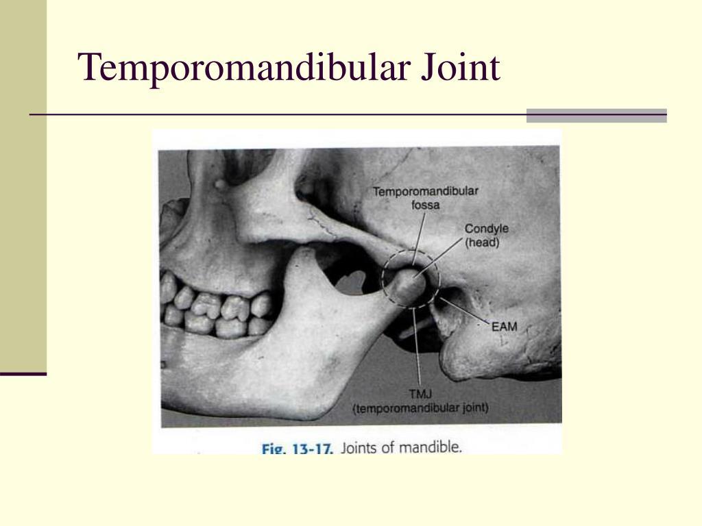ppt mandible   tmj lecture powerpoint presentation id 292789 Skull Bone Diagram Labeled Skull Bone Diagram Labeled