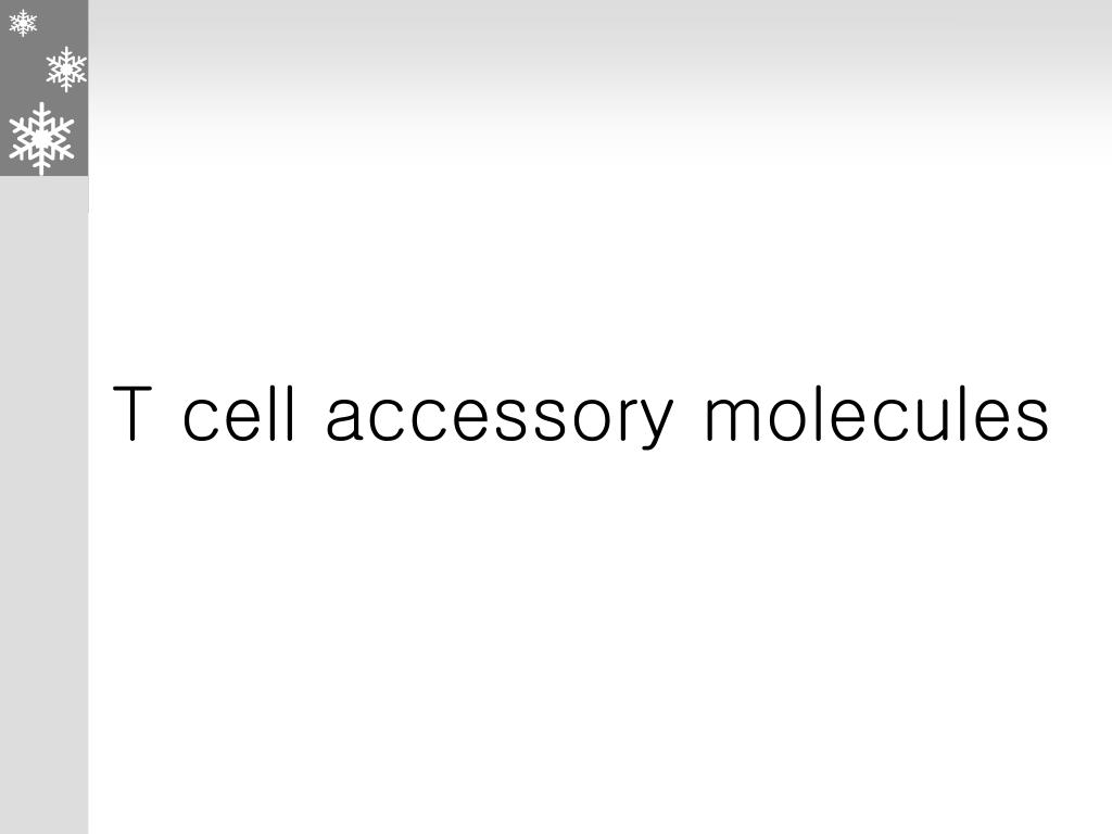 T cell accessory molecules