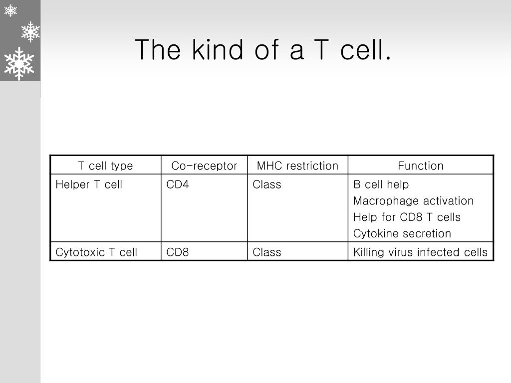 The kind of a T cell.