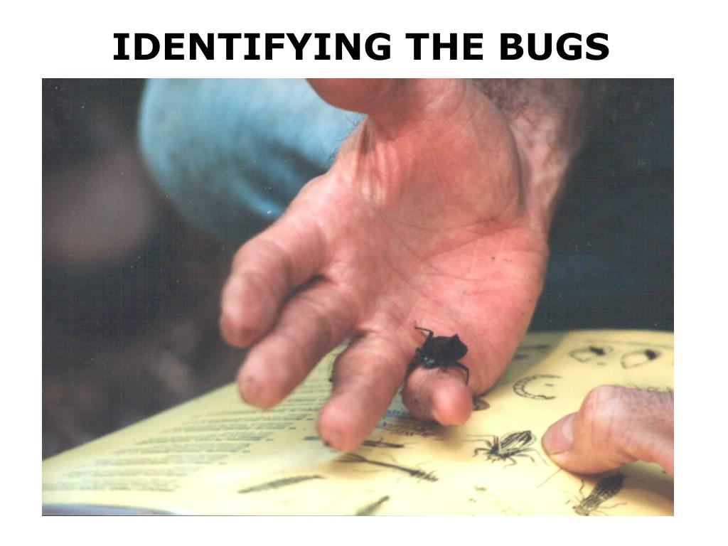 IDENTIFYING THE BUGS