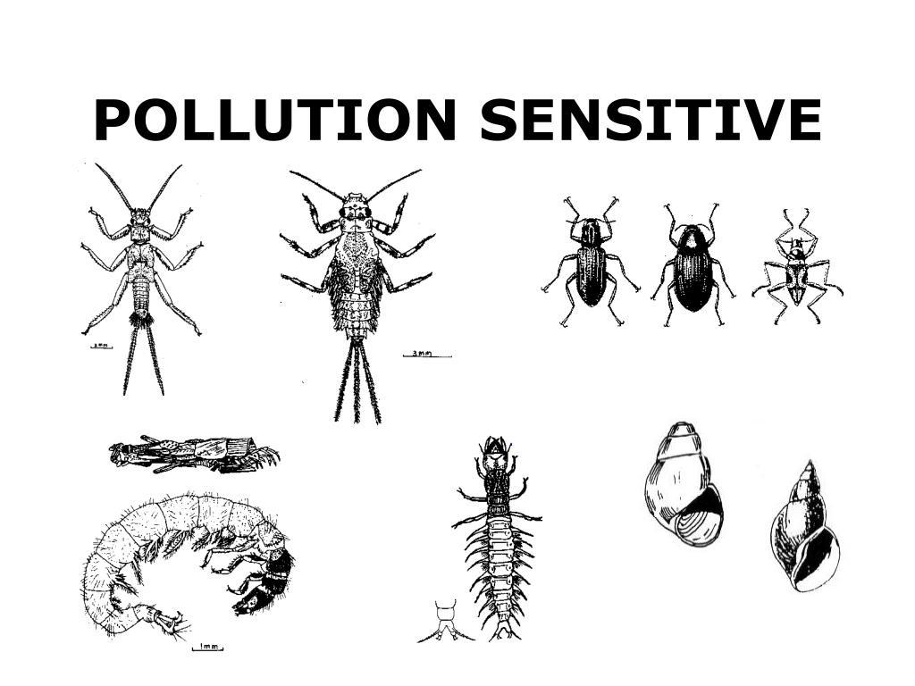 POLLUTION SENSITIVE