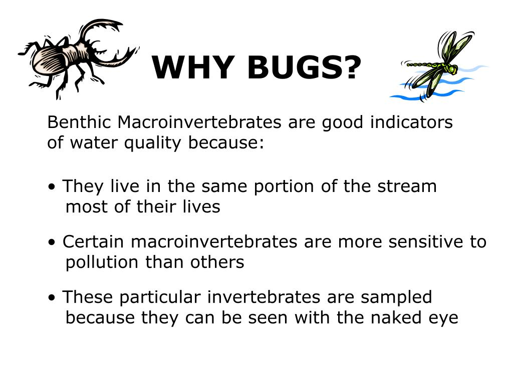 WHY BUGS?