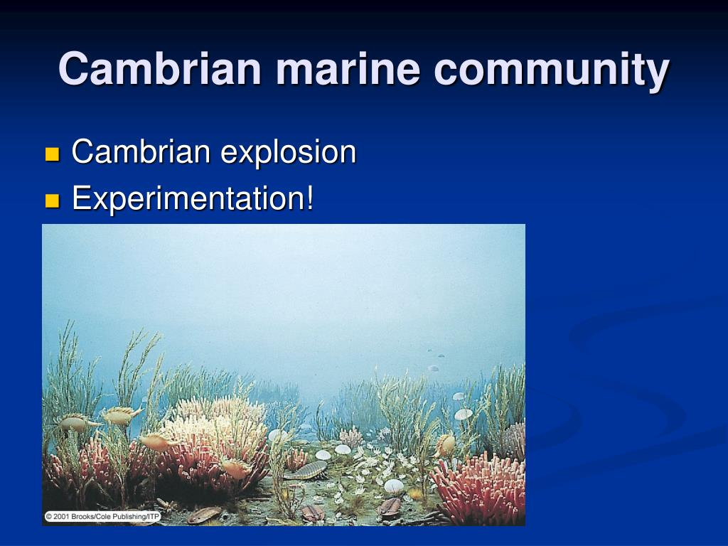 Cambrian marine community