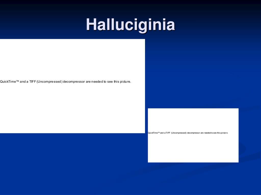 Halluciginia