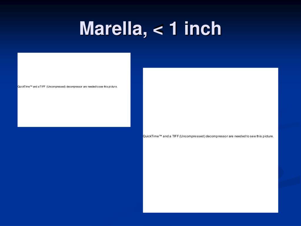 Marella, < 1 inch