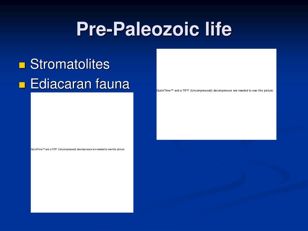 Pre-Paleozoic life