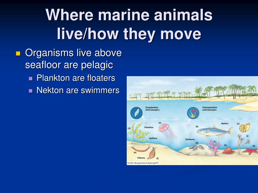 Where marine animals live/how they move