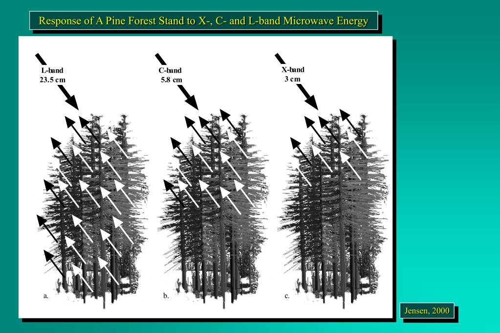 Response of A Pine Forest Stand to X-, C- and L-band Microwave Energy