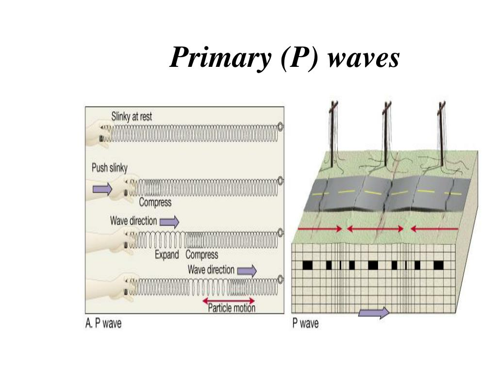 Primary (P) waves