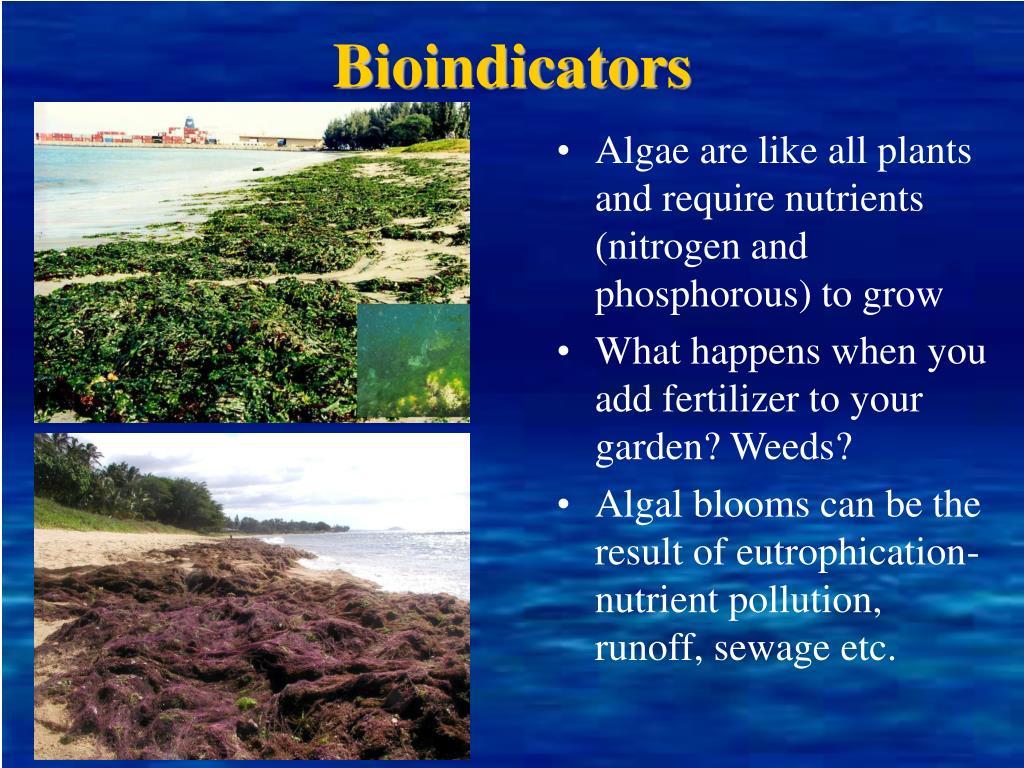 Bioindicators