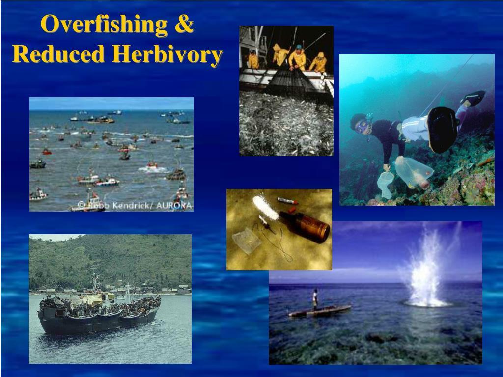 Overfishing & Reduced Herbivory