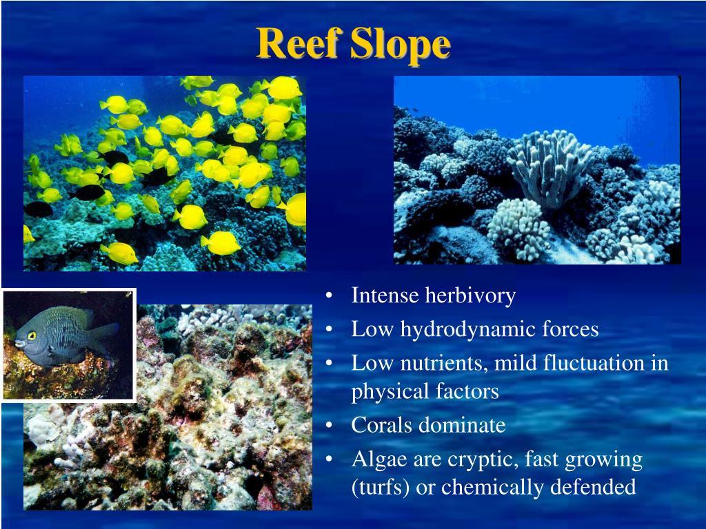Reef Slope