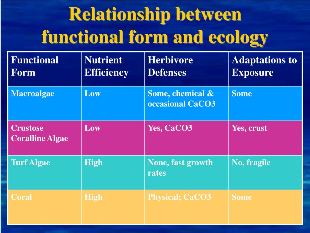 Relationship between functional form and ecology