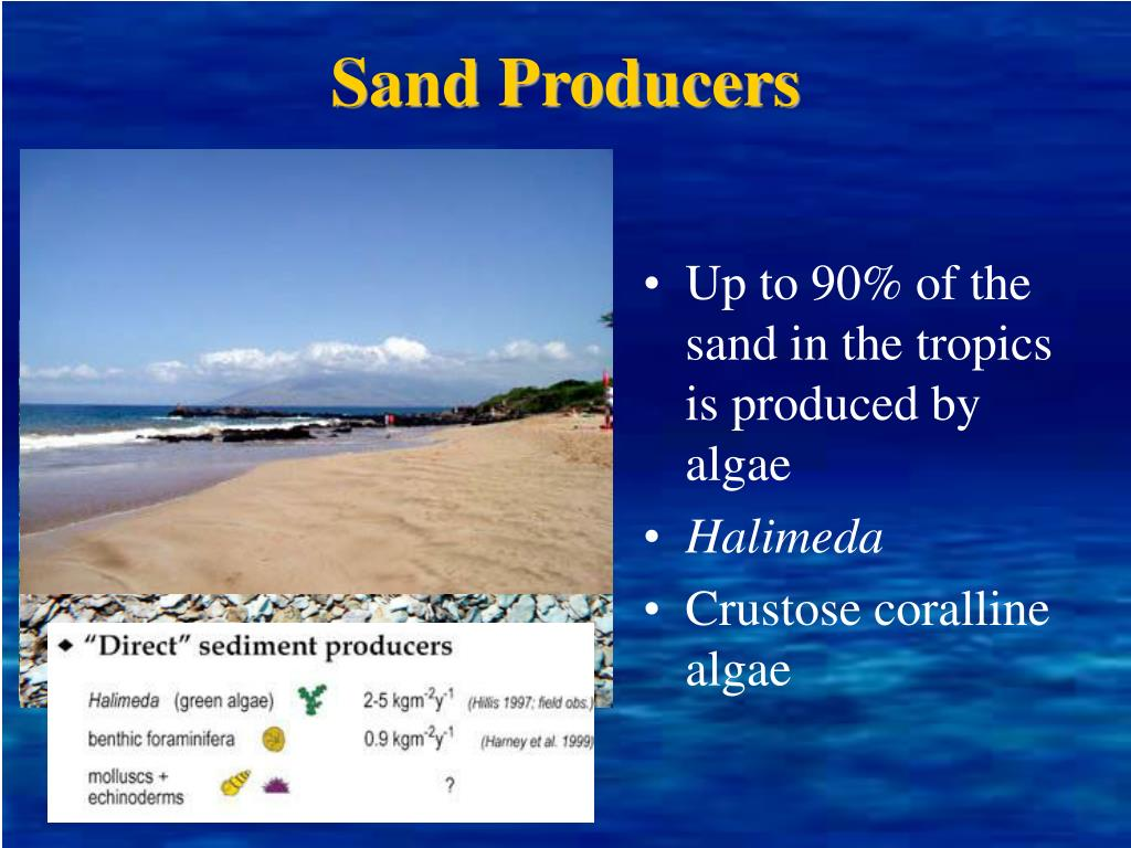 Sand Producers