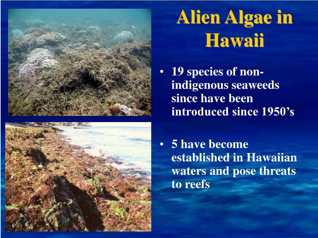 Alien Algae in Hawaii
