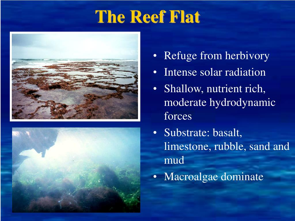 The Reef Flat