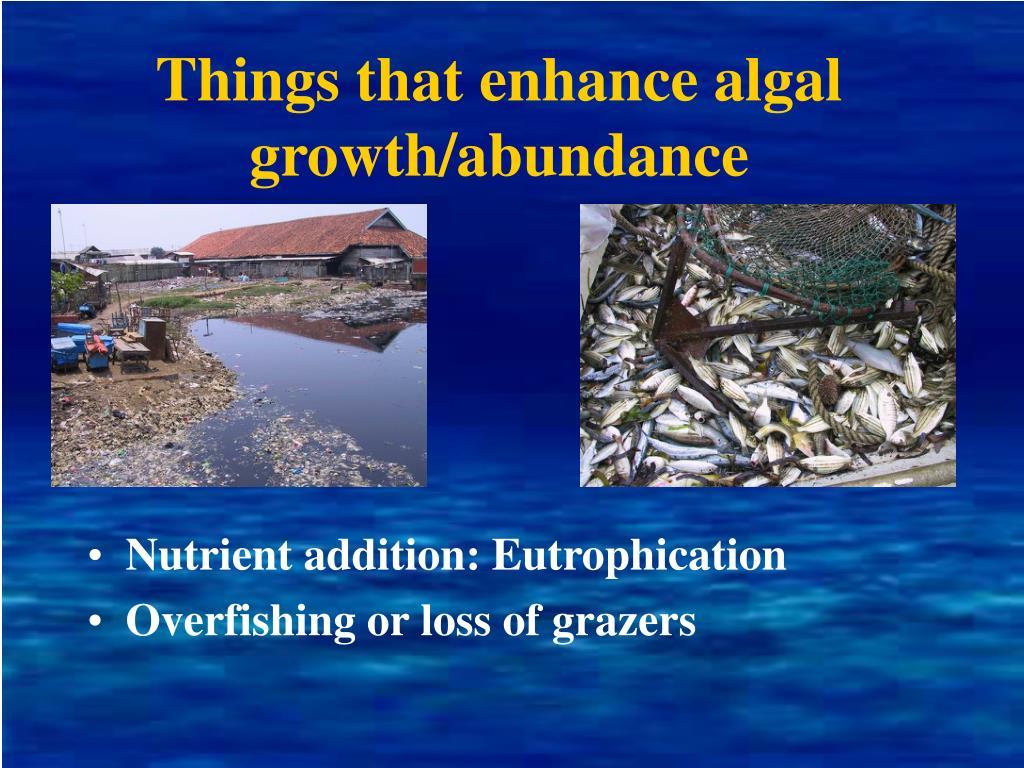 Things that enhance algal growth/abundance