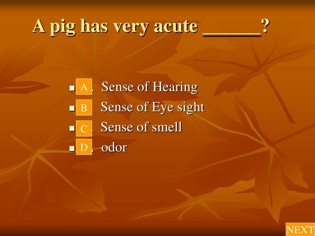 A pig has very acute ______?