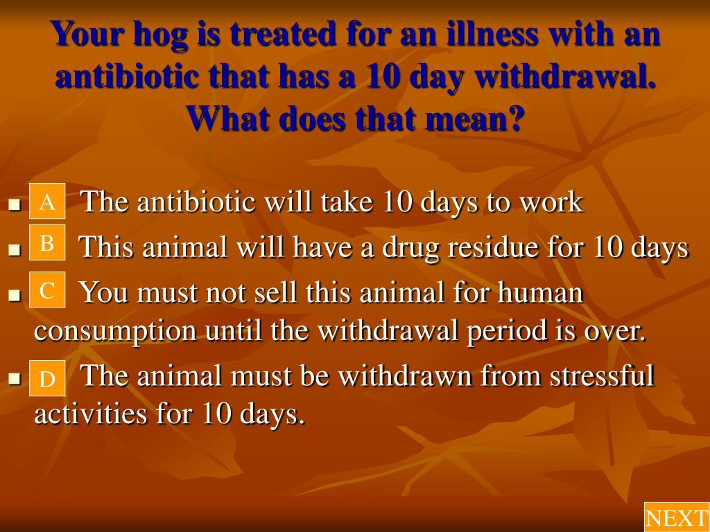Your hog is treated for an illness with an antibiotic that has a 10 day withdrawal.  What does that mean?