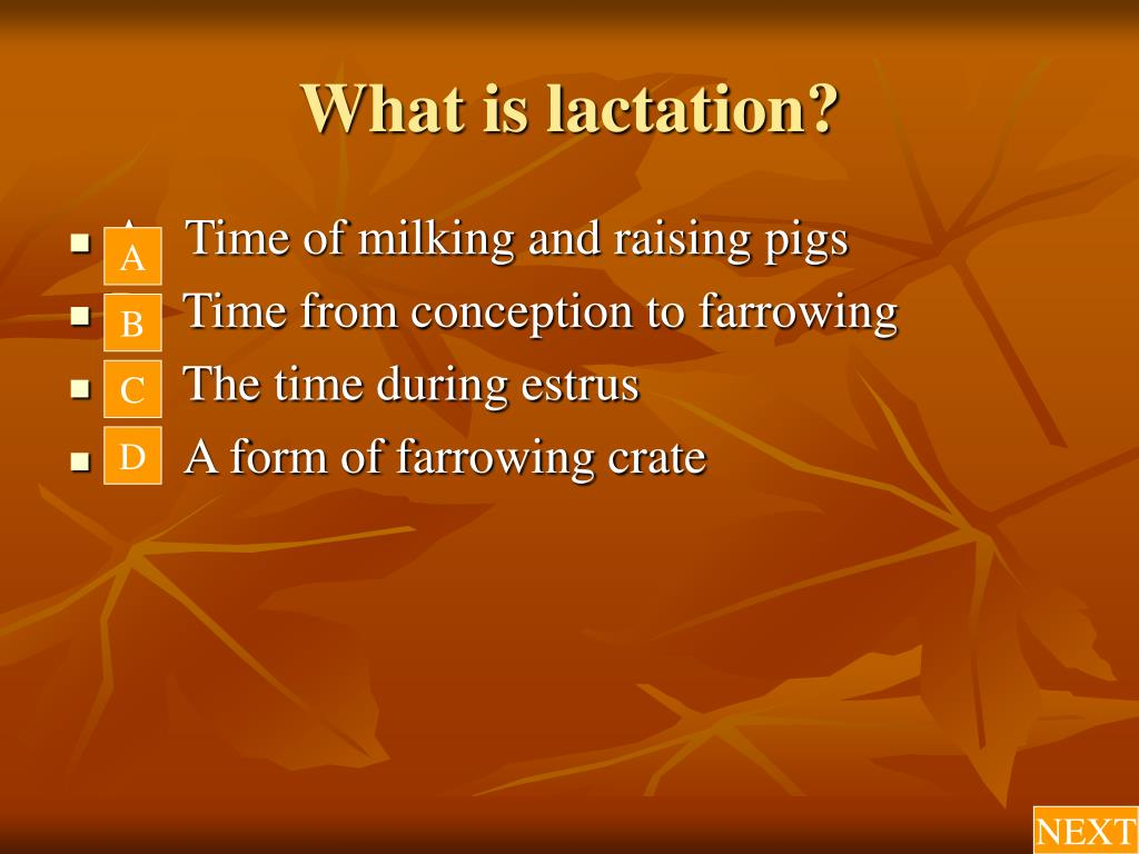 What is lactation?