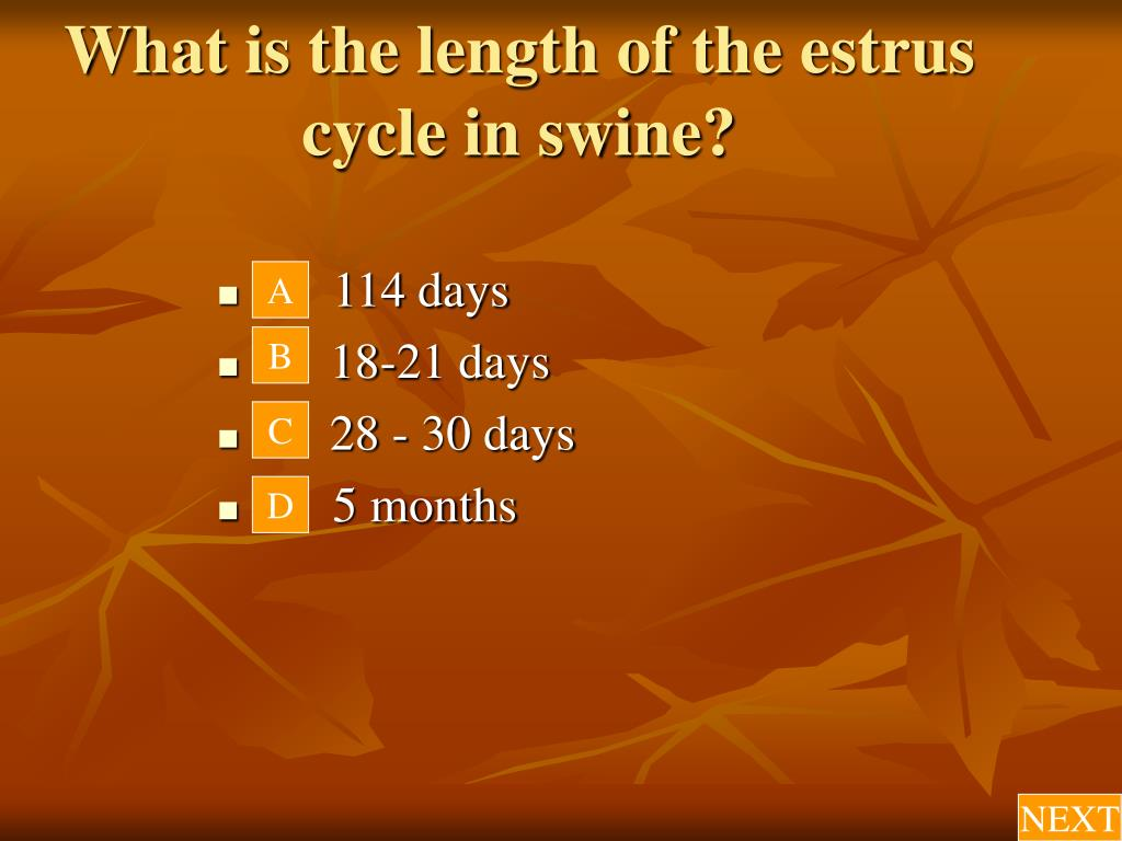 What is the length of the estrus cycle in swine?