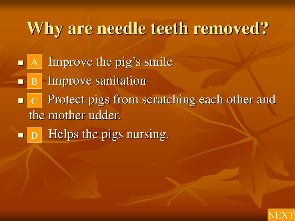 Why are needle teeth removed?