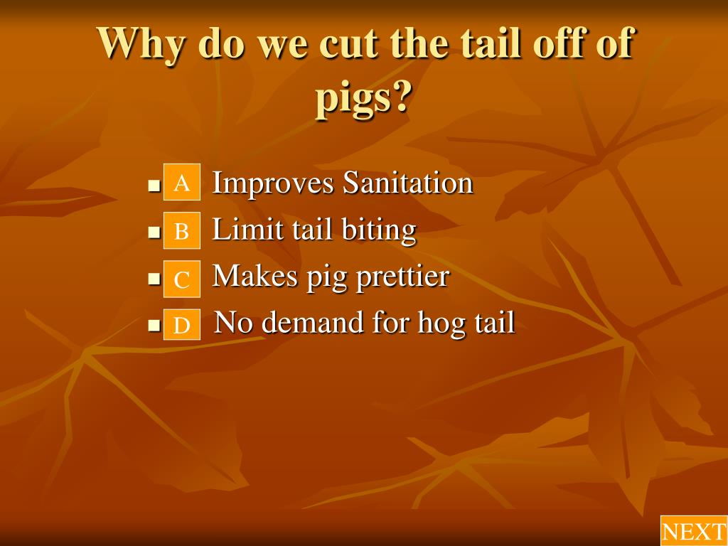 Why do we cut the tail off of pigs?