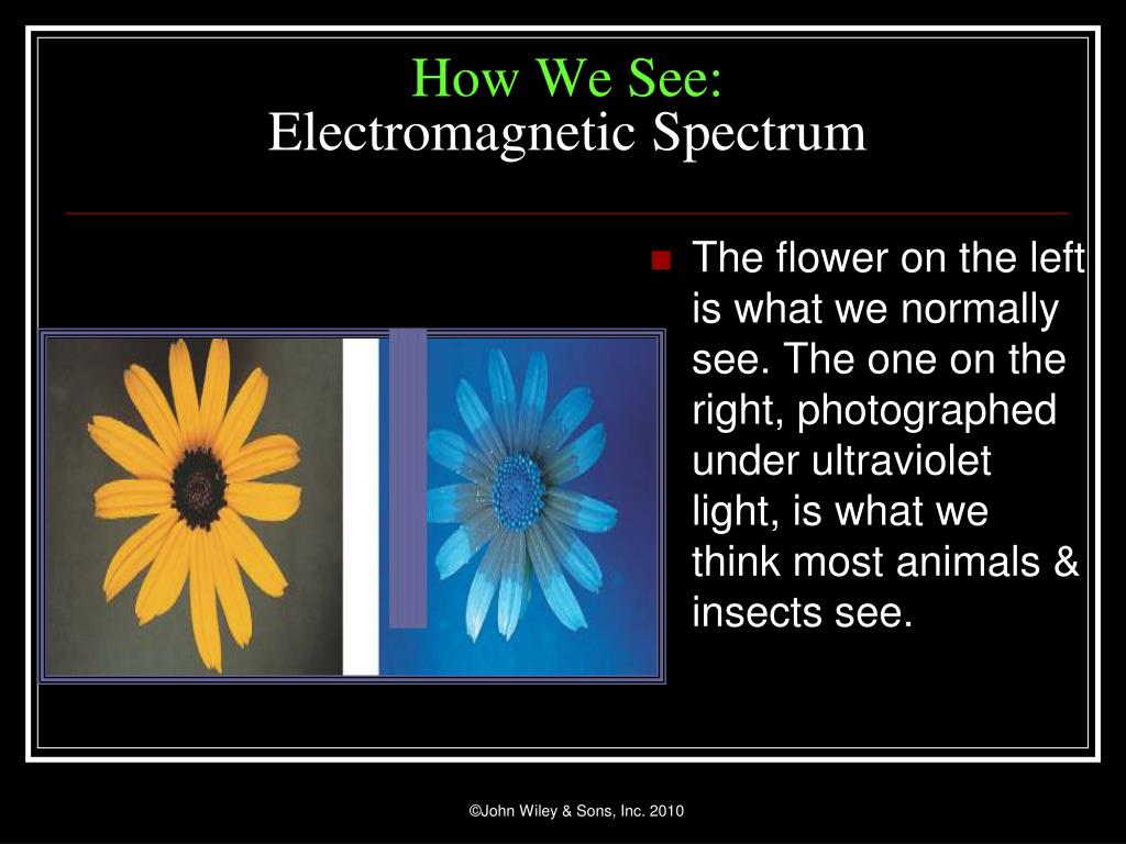 The flower on the left is what we normally see. The one on the right, photographed under ultraviolet light, is what we think most animals & insects see.